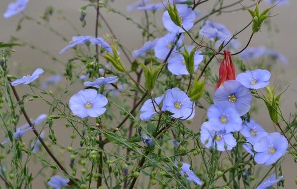 Picture field, flowers, plant, petals, meadow