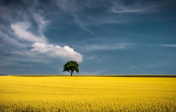 Picture field, horizon, field, tree, wood, horizon, fields of gold, field of gold