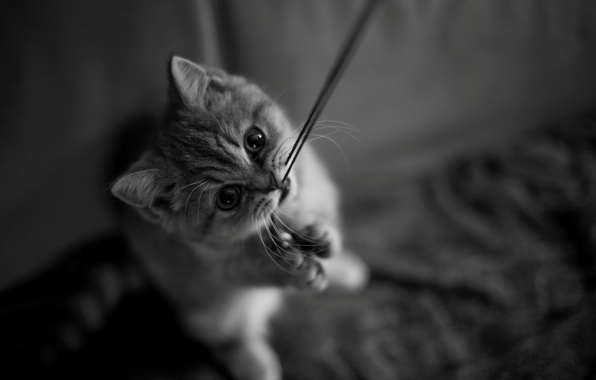 Picture cat, cat, mustache, look, kitty, legs, muzzle, black and white, kitty, thread