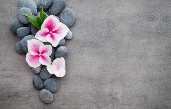 Spa wallpaper  Wallpaper flowers, stones, flower, orchid, stones, spa, zen images ...