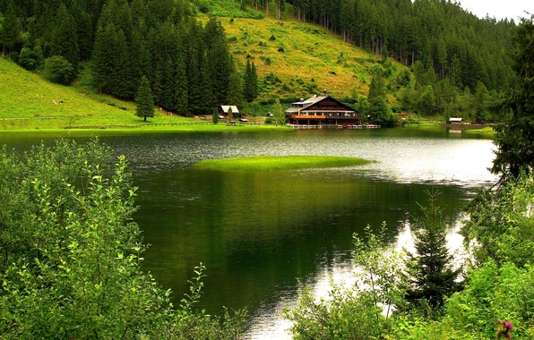 Picture trees, mountains, nature, house, river, boats, pasture.