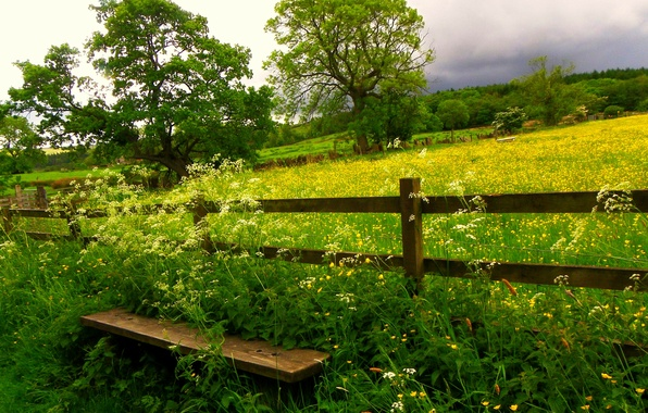 Picture field, the sky, grass, clouds, trees, flowers, nature, grass, sky, trees, field, bench, nature, flowers, …