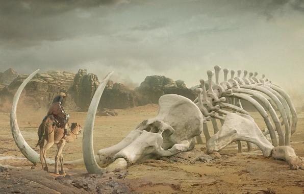 Picture desert, art, camel, skeleton, mammoth, tusks, giant, Bedouin, Daniel Romanovsky