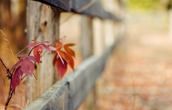 Picture greens, grass, leaves, macro, red, background, widescreen, Wallpaper, the fence, blur, fence, gate, stem, the …