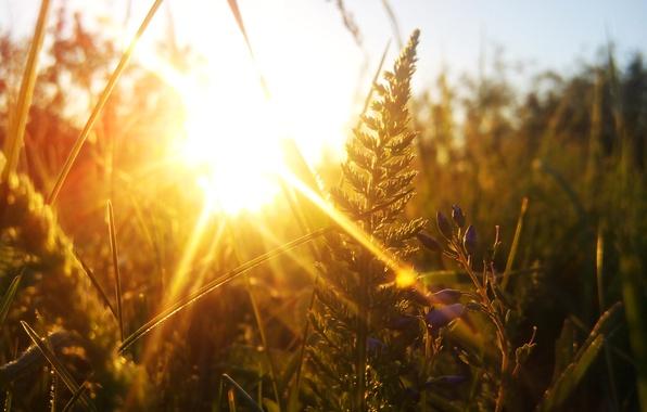 Picture the sun, macro, sunset, yarrow