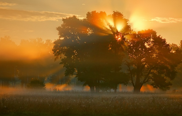 Picture field, light, nature, fog, tree, morning