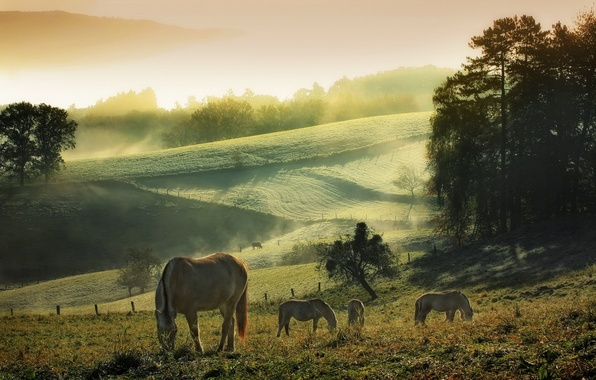 Picture summer, the sky, nature, fog, morning, Horses