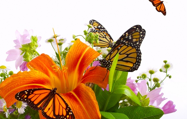Picture butterfly, flowers, Lily, orange, bouquet