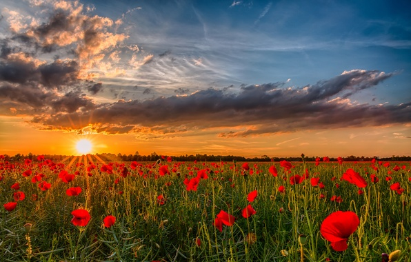 Picture field, the sun, sunset, flowers, nature, photo, dawn, Maki, sky, landscape, nature, sunset, flowers, poppies
