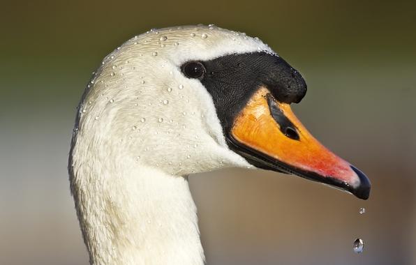 Picture drops, eyes, beak, duck, drops, eye, duck, beak