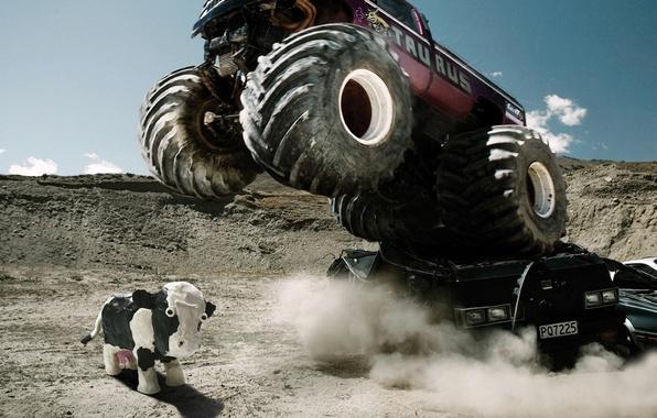 Picture cow, SUV, destruction