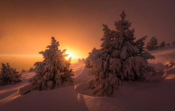 Picture winter, the sun, light, snow, trees, nature, ate