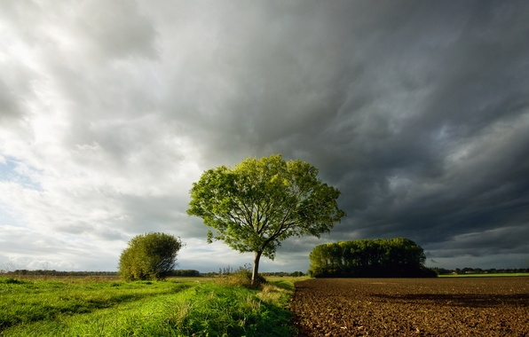 Picture field, the sky, grass, clouds, clouds, tree