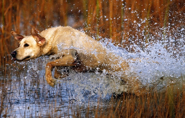 Picture water, squirt, jump, dog, dog
