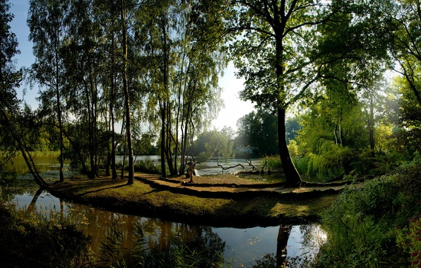 Picture The sun, Water, Reflection, Trees, Green