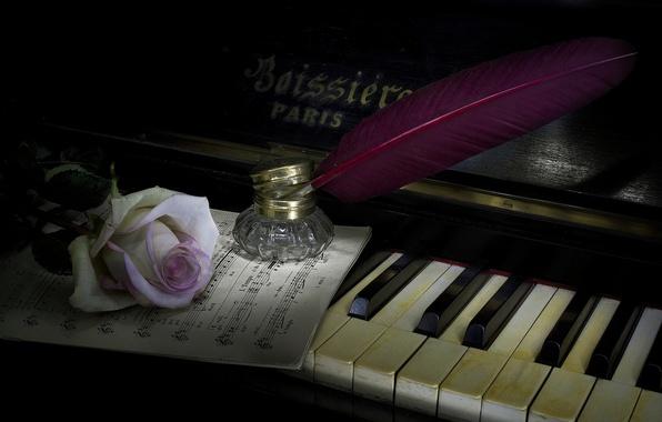 Photo Wallpaper Style Music Pen Rose Piano