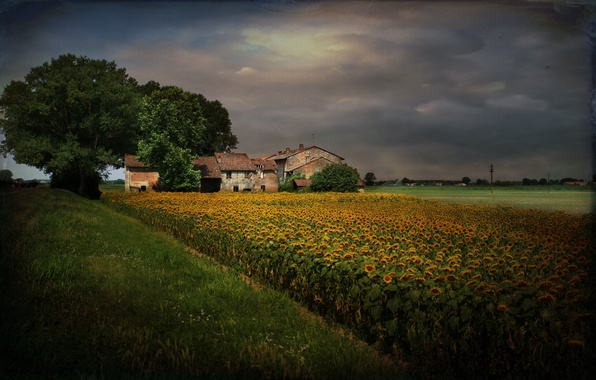 Picture sunflowers, landscape, style, home