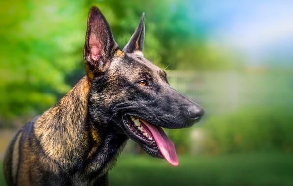 Picture face, each, dog, blur, bokeh