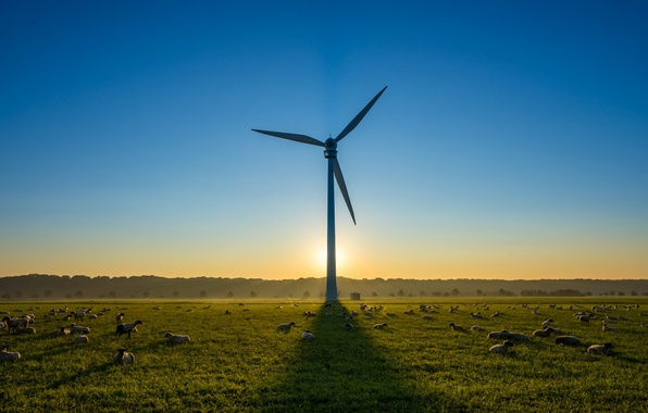 Picture sheep, windmill, morning
