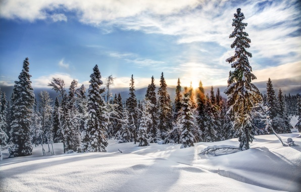 Picture winter, forest, snow, trees, ate, Norway, Norway, Trysil, Trysil