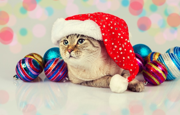 Picture cat, cat, balls, toys, cap