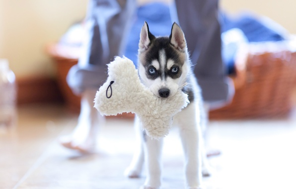 Picture toy, dog, puppy, husky
