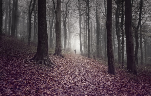 Picture road, autumn, forest, leaves, trees, fog, people, forest, trees, autumn, leaves, fog, way, man