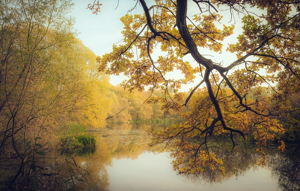 Picture autumn, forest, leaves, trees, branches, lake, yellow