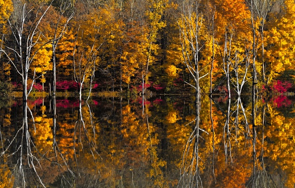 Picture autumn, trees, lake, reflection