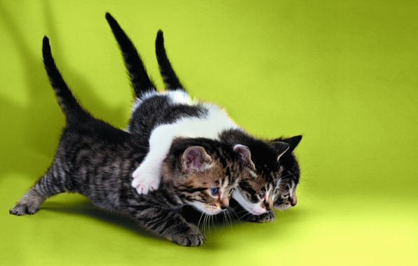 Picture Cats, kittens, three kittens