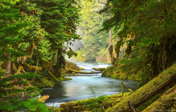 Picture forest, trees, nature, river, moss