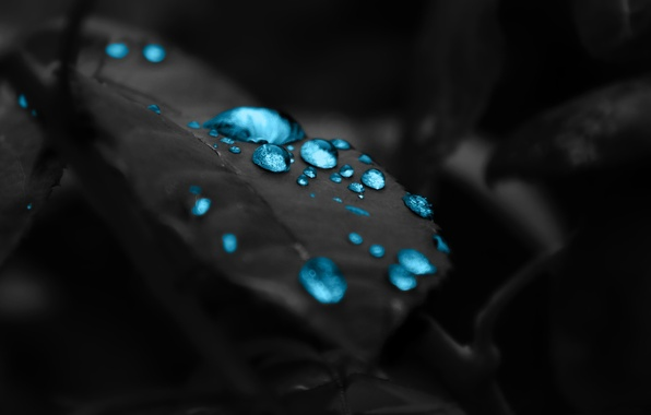Picture drops, background, black, leaf, beautiful