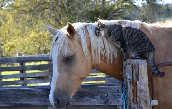 Picture cat, cat, horse, horse, friendship