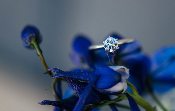 Picture flowers, stone, petals, ring, blue, wedding