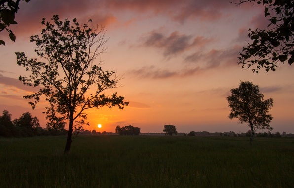 Picture greens, the sky, grass, leaves, the sun, clouds, trees, landscape, sunset, nature, background, tree, widescreen, …