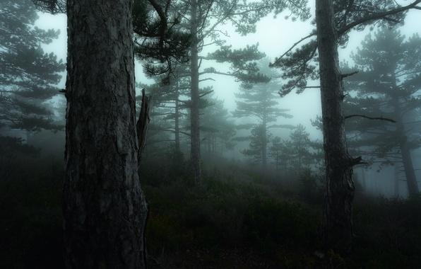 Picture greens, forest, trees, fog, France, moss, Nikon, haze, Green, Tree, France, Mist, Provence, Fog, Mood, …