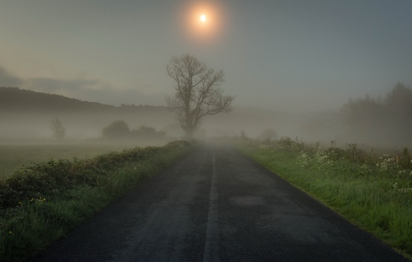 Picture road, grass, fog, tree, morning
