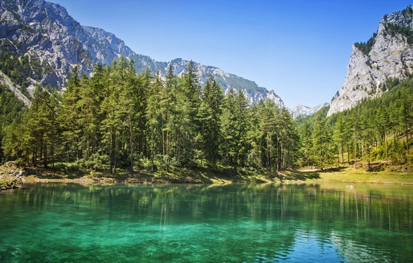 Picture forest, mountains, nature, lake, tree, forest, nature, mountains, lake, tree