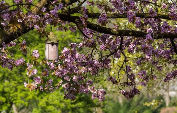 Picture branches, tree, spring, Sakura, house, flowering, feeder