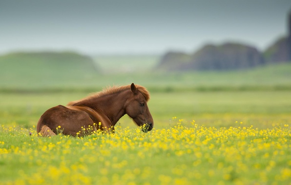 Picture field, summer, flowers, nature, animal, horse