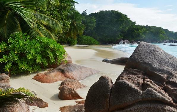 Picture sea, wave, beach, tropics, stones, waves, beach, sea, rocks, tropics, Palma.the bushes, palmista