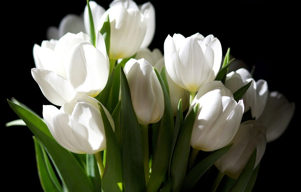 Picture flowers, the dark background, bouquet, tulips, white
