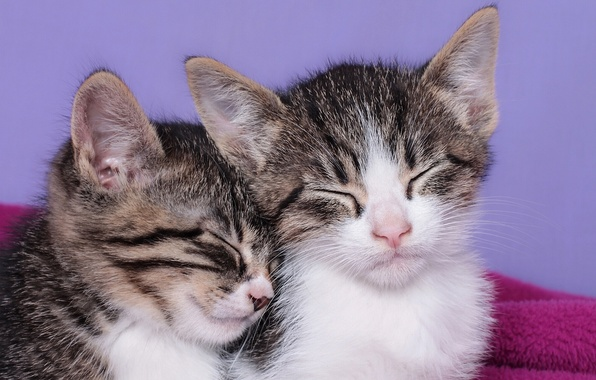 Picture sleep, kittens, kids, sleeping