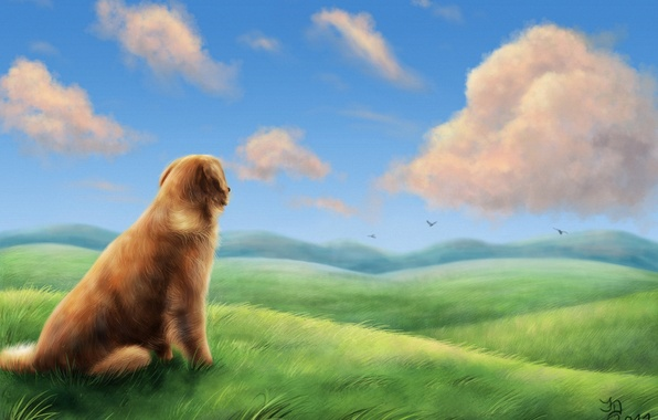 Picture field, grass, clouds, birds, the wind, hills, dog, art