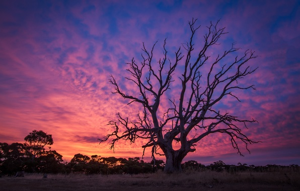 Picture sunset, tree, old, twilight, dawn