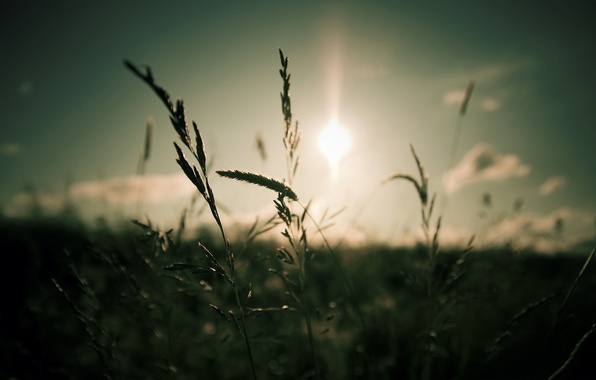 Picture the sky, grass, the sun, clouds, macro, light, nature, focus, light, grass, sky, nature, 1920x1200, …