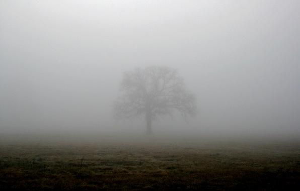 Picture field, fog, tree