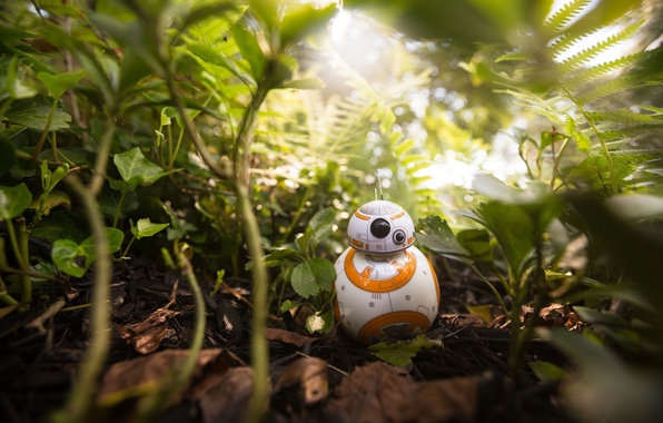 Picture kawaii, Star Wars, forest, robot, jungle, cute, vegetation, drone, Episode VII, Star Wars: The Force …