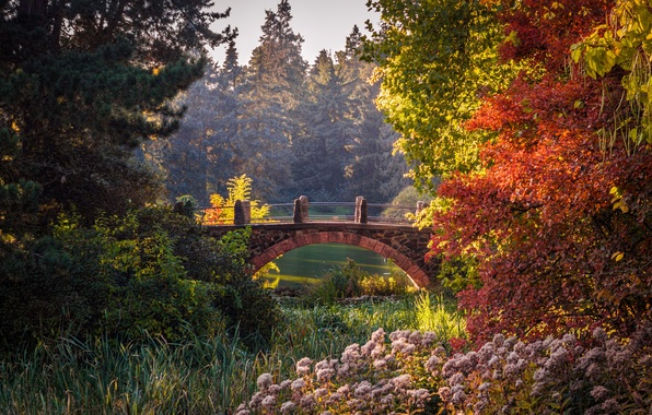 Picture autumn, trees, bridge, pond, Park, beauty, Germany, the bushes, Berlin, gardens, Botanical Garden