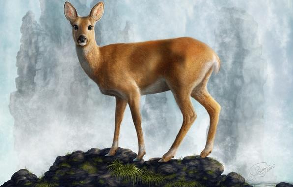 Picture water, stones, animal, deer, ROE